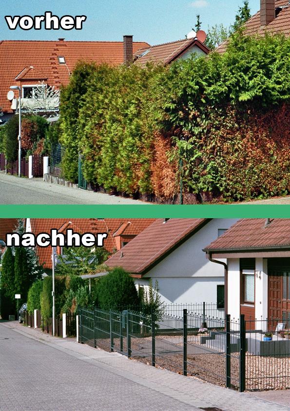 scherer1